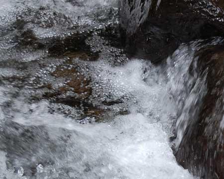 water_beaver_crk